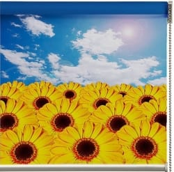 Roller blind featuring printed sunflowers and a blue sky above.