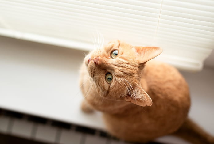 A cat sitting on the floor next to window blinds, staring up at the camera.