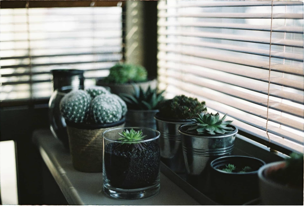 Plants in bay windowsill with blinds in background