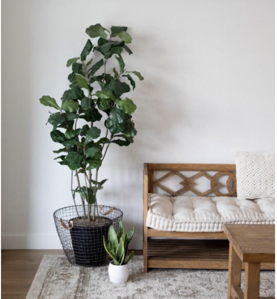 A picture containing a wall, green potted plants, furniture, and rug